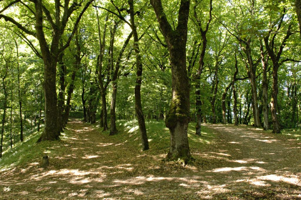 parc du château d'Arlay