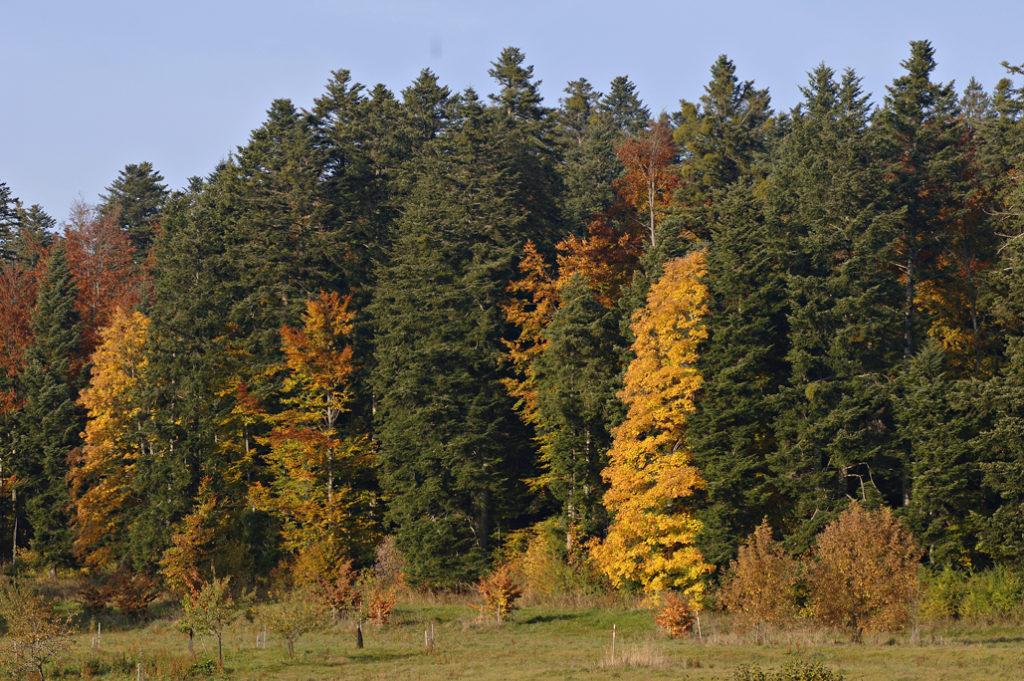 Arboretum du Lavot