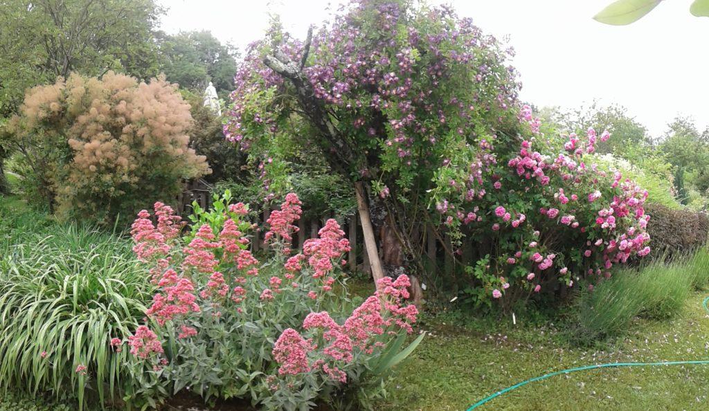 Jardin en Bouillot (6)