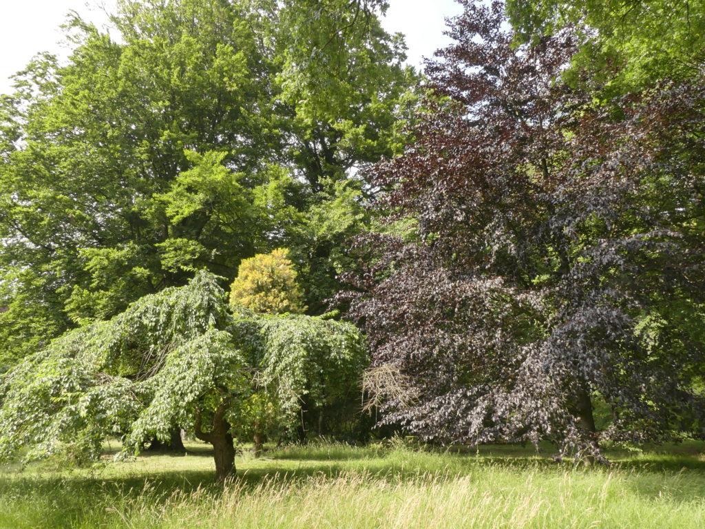 2019 Belgique Flandre Hemelrijk arboretum famille de Belder